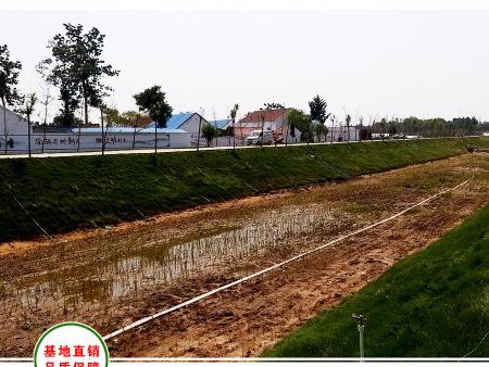 烟台莱州美丽乡村河道绿化工程