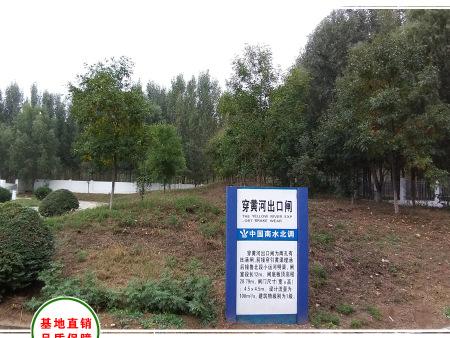 泰安南水北调项目段绿化工程