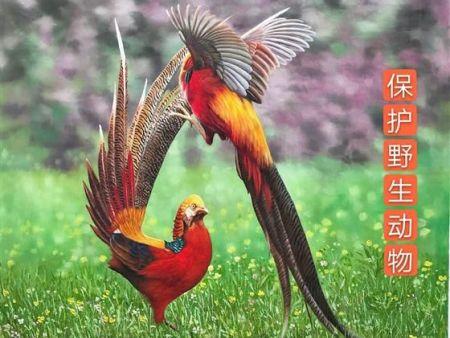 与 野 生 动 植 物 分 享 盛 世