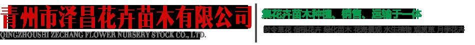 青州市泽昌花卉苗木有限公司