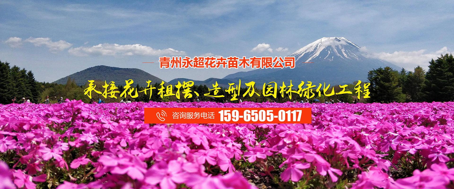 青州永超花卉苗木有限公司