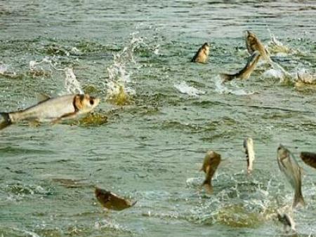 农业农村部:抓好水产养殖与捕捞生产 有序稳产保供