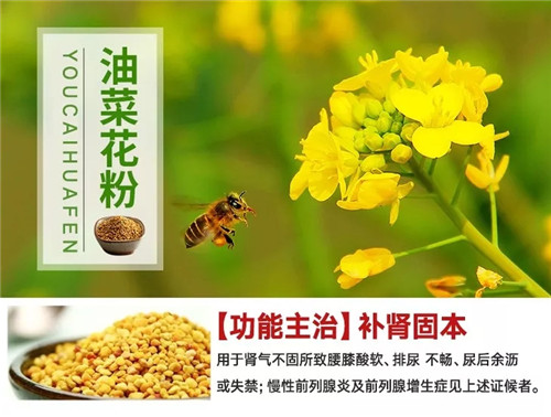 """""""前列腺克星""""的油菜花粉,为什么这么有效?"""