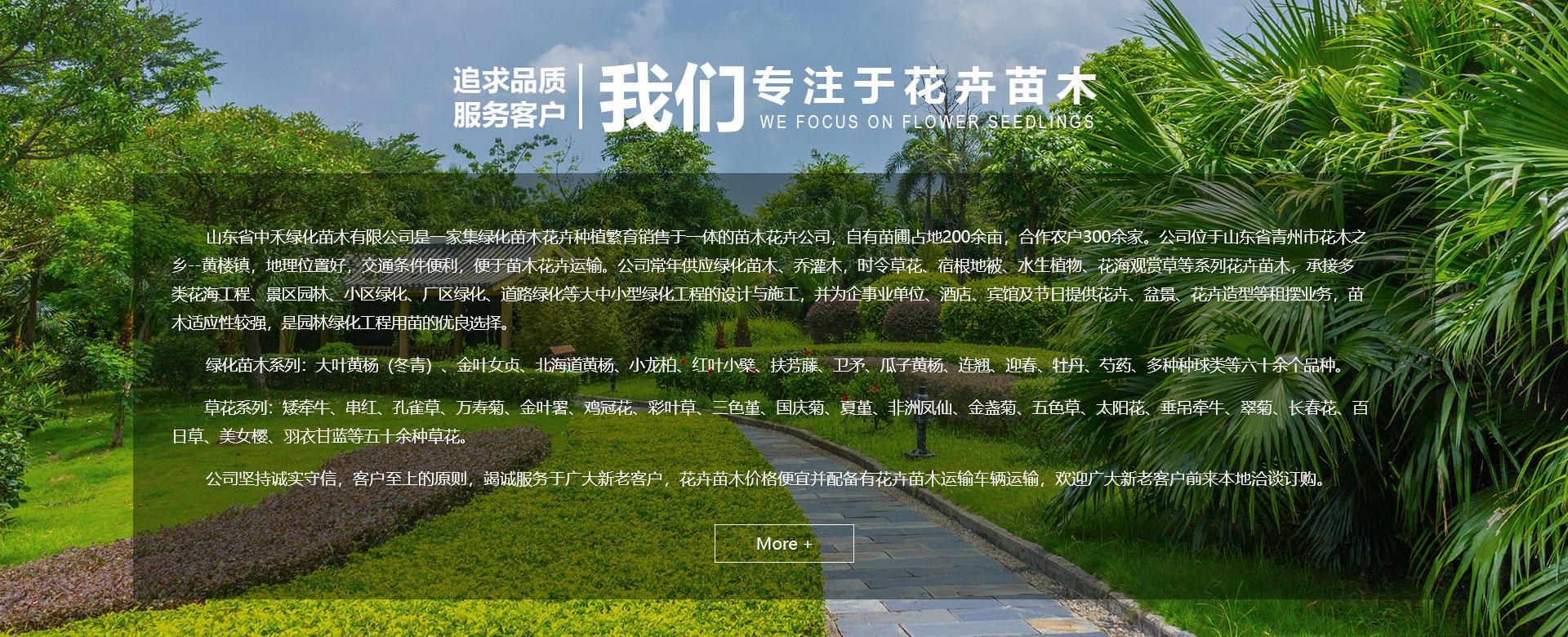 山东省中禾绿化苗木有限公司介绍