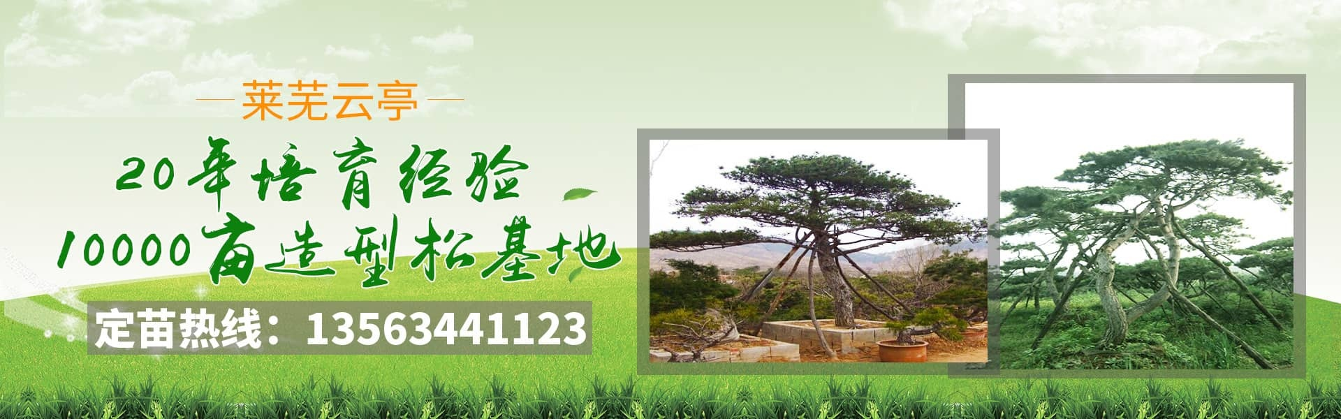 Modeling of Pinus tabulaeformis