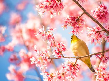 春天已经到来,我们必定战胜疫情!