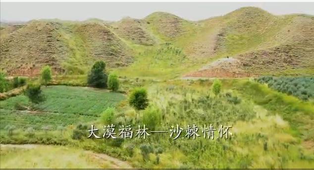 大漠福林-沙棘情怀