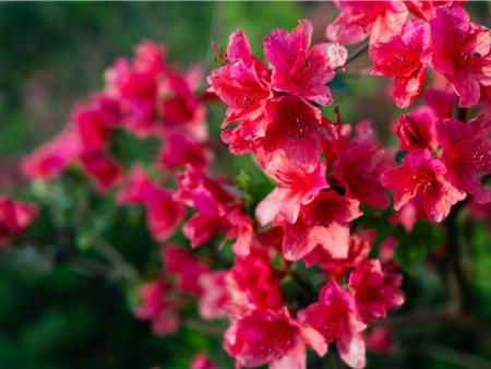 营口旅游景点踏春赏花