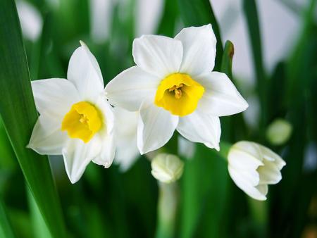 空气干燥,养花有哪些注意的事项呢?
