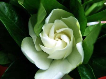 领航花艺小编分析花卉不开花的主要原因。