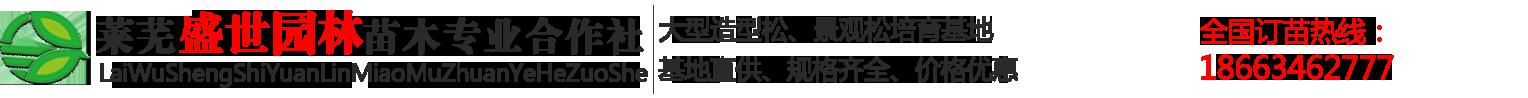 山東萊蕪造型景觀松基地