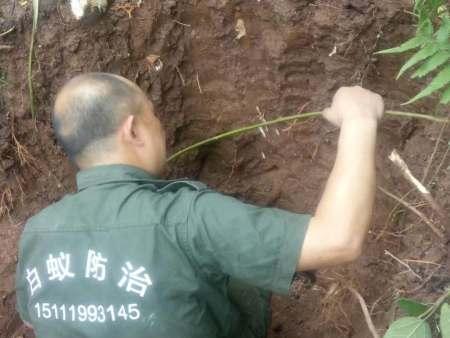 白蚁挖巢治理