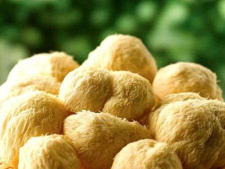 常吃蘑菇的人,身体可能会有这些改善