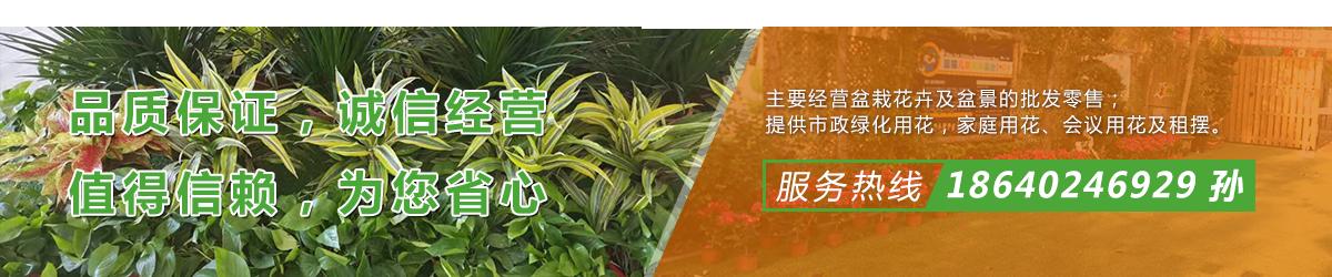 盆栽花卉盆景的批发零售