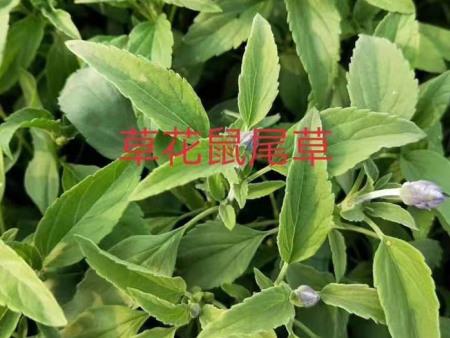 草花花卉种植的土壤要求