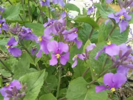 种植宿根花卉的注意事项