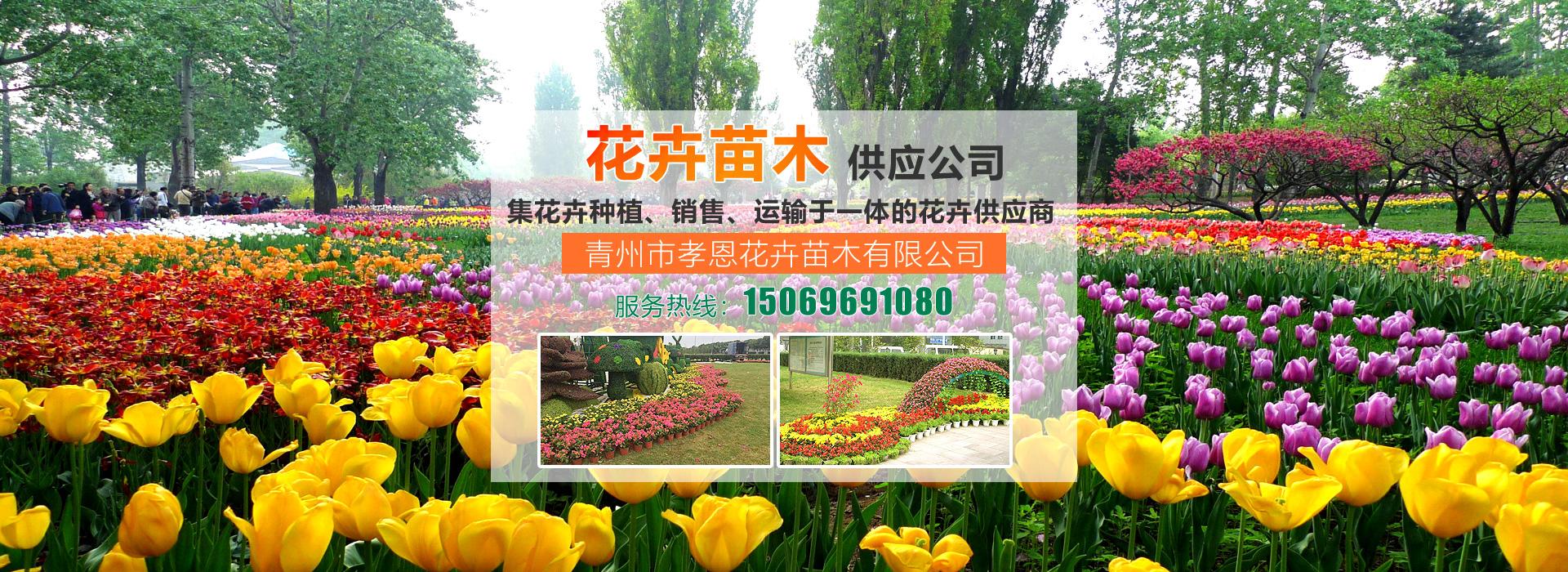青州市孝恩花卉苗木有限公司