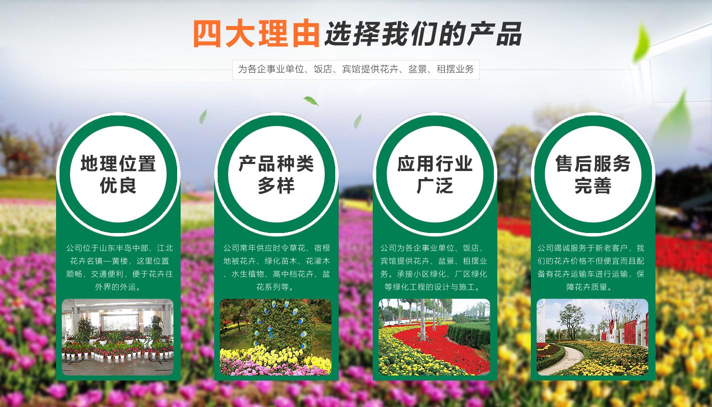 青州市海森花卉苗木有限公司