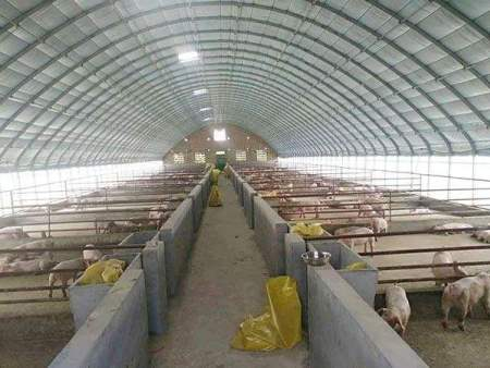 养猪大棚怎么盖
