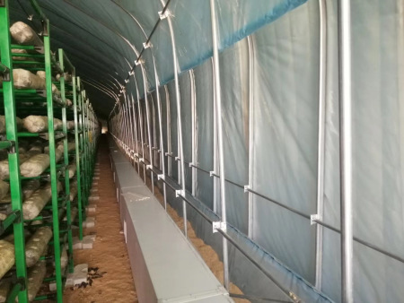 养殖肉鸡用的养殖大棚应该如何建设?