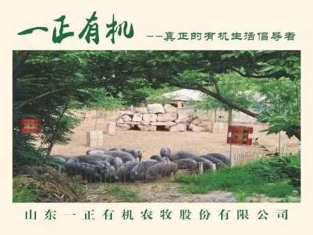 """一正beplay官网注册,""""胃""""健康而""""食"""""""