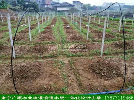南宁100亩左右果园 这样安装滴灌水肥一体化