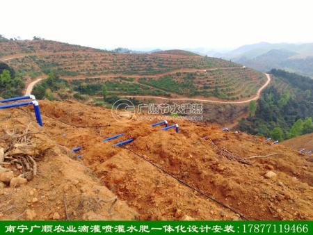 广西山地使用微喷灌水肥一体灌溉已成趋势