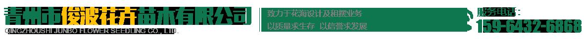 青州市俊波花卉苗木有限公司