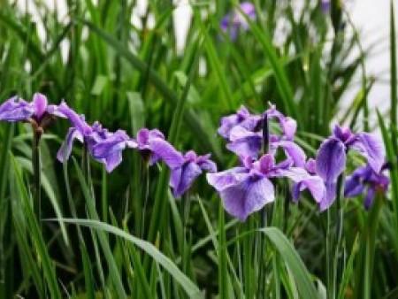 花卉知识——室内养花注意事项