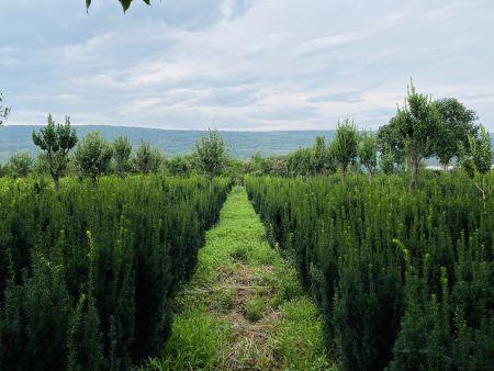 """未来市场什么样?绿植盆栽在""""互联网+""""推动下的形势分析"""