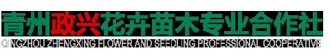 青州政兴花卉苗木专业合作社