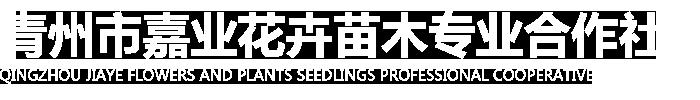 青州市嘉业花卉苗木专业合作社