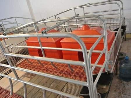 河南猪用产床厂家浅谈:猪用产床的维护