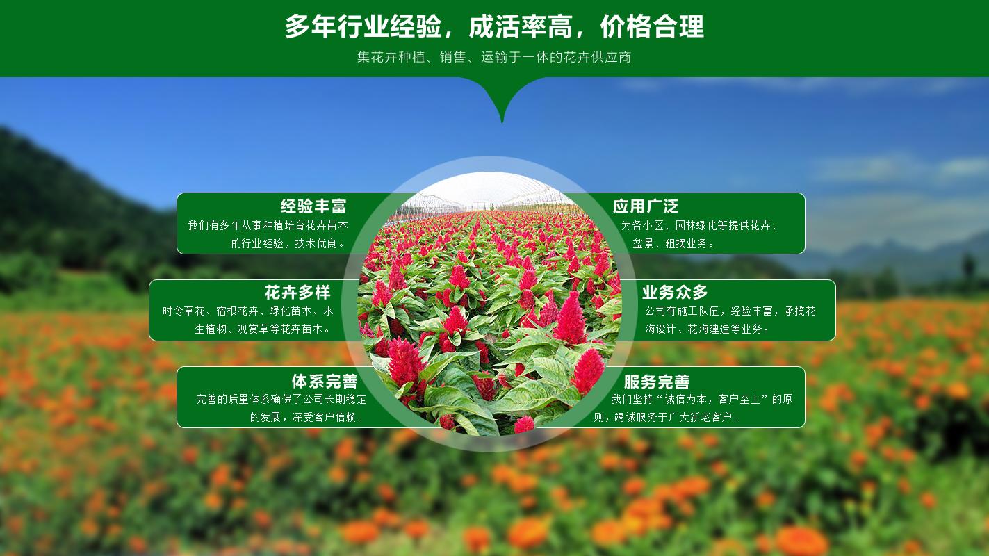 青州市雅诗花卉苗木有限公司