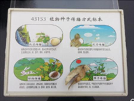 植物种子传播方标本