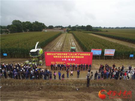 """全国专家学者齐聚临夏为玉米高质量发展""""传经送宝"""""""