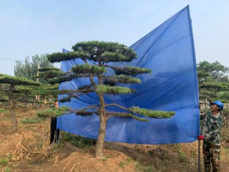 景guan松