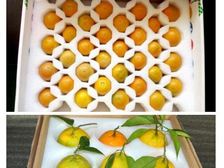 哈爾濱水果泡沫箱的優點
