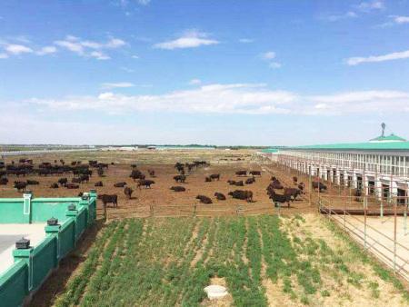 养殖废水处理解决方案