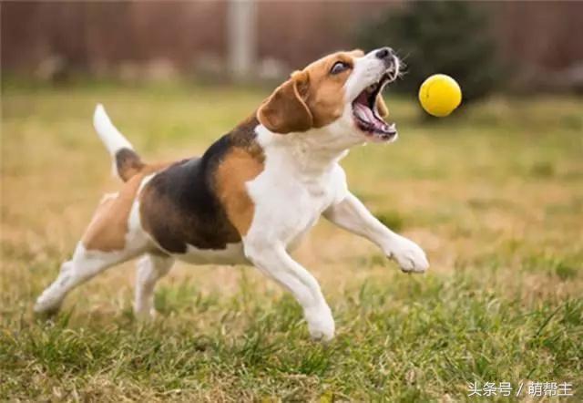 广东可信赖的惠州宠物培训公司_鸿威犬舍 宠物培训学校