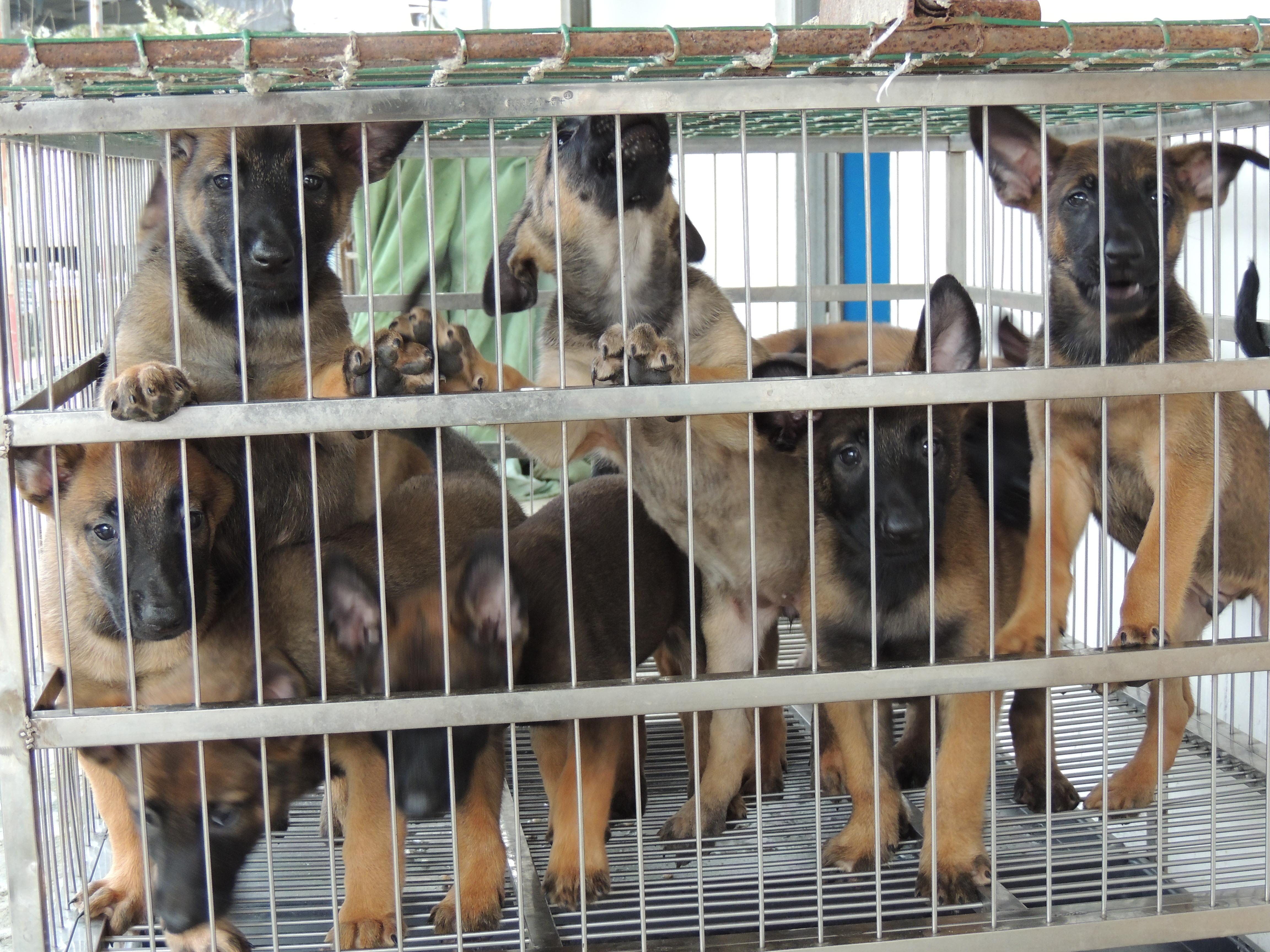 惠州宠物培训专业提供,宠物培训班价格