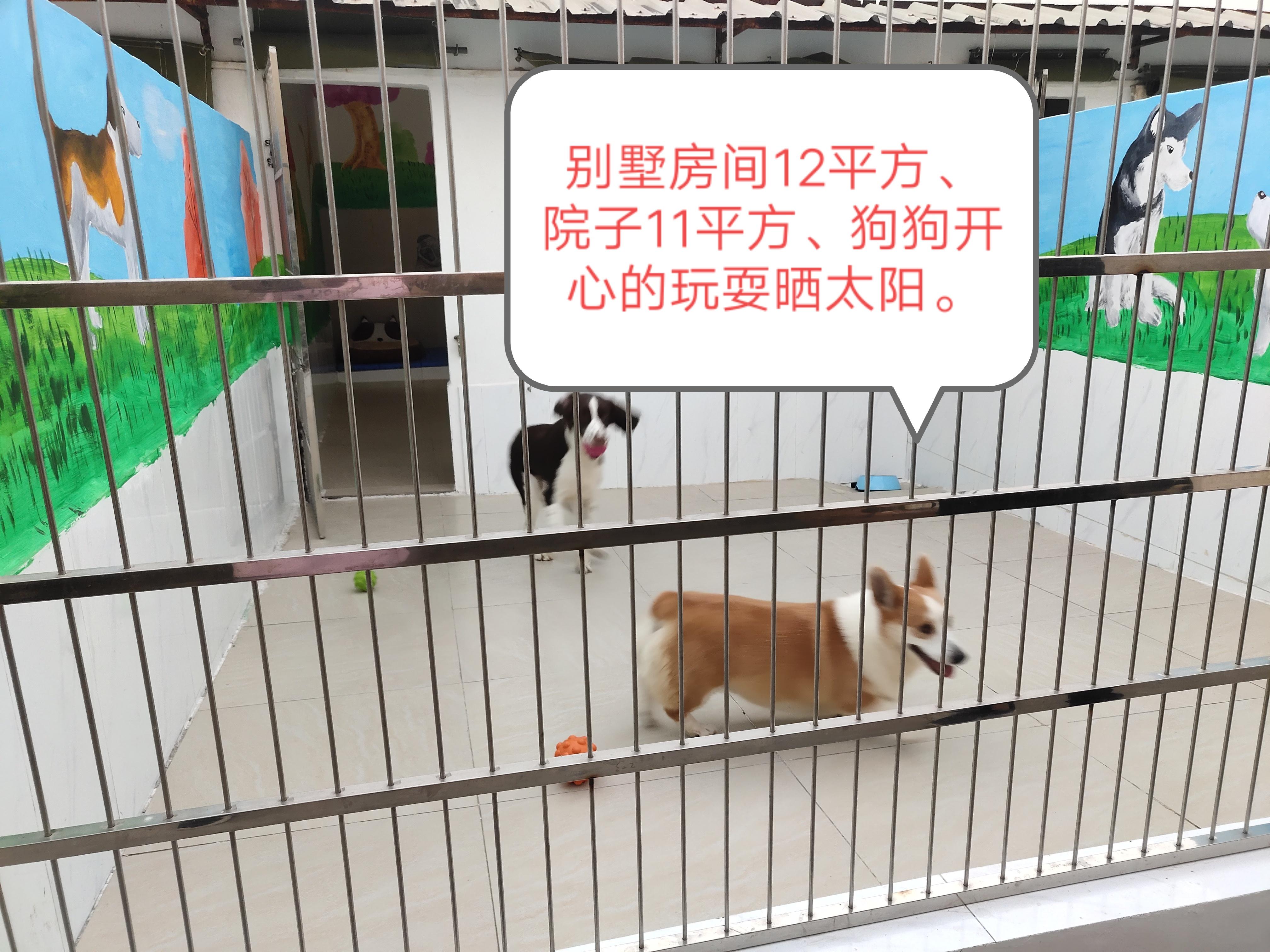 广东信誉好的惠州宠物培训公司_鸿威犬舍_宠物培训学校价格