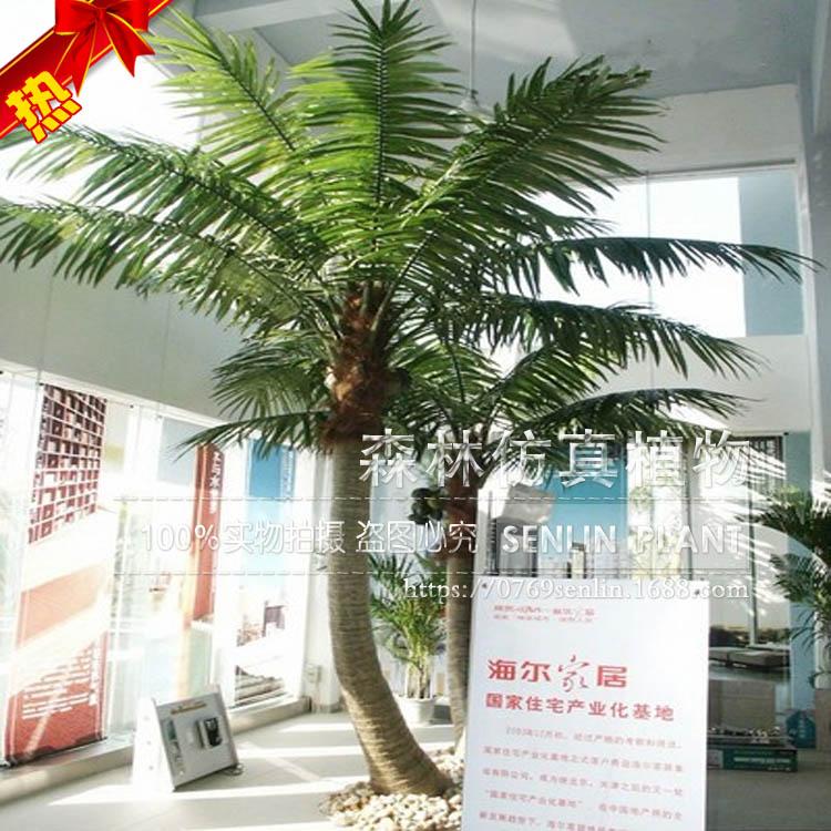 海南风景图片橄子树