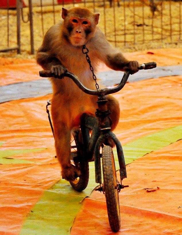 马戏团资源大象表演景观动物展览企鹅展租赁