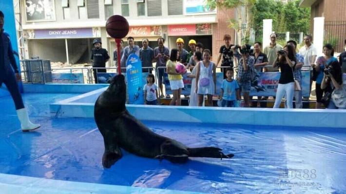 专业的海洋动物展览海狮表演企鹅展租赁