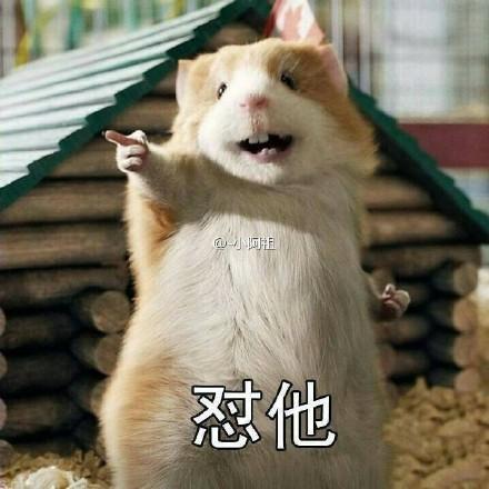 老鼠在车里存一年花生被发现 网友的评论亮了图片