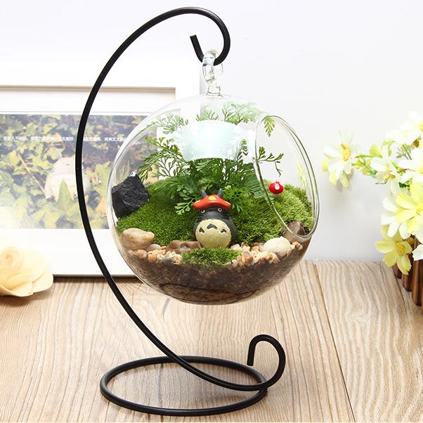 微景观生态瓶.jpg