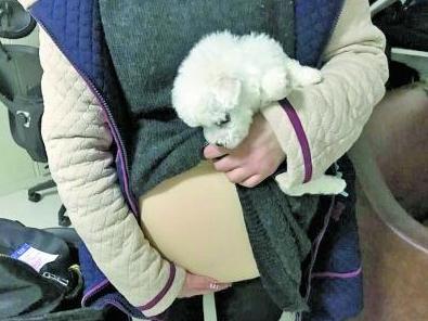 女学生肚子藏狗扮孕妇 因动得厉害安检员吓一跳.png