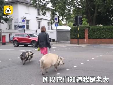 这俩猪牛了:拍广告、演电视剧、住富人区