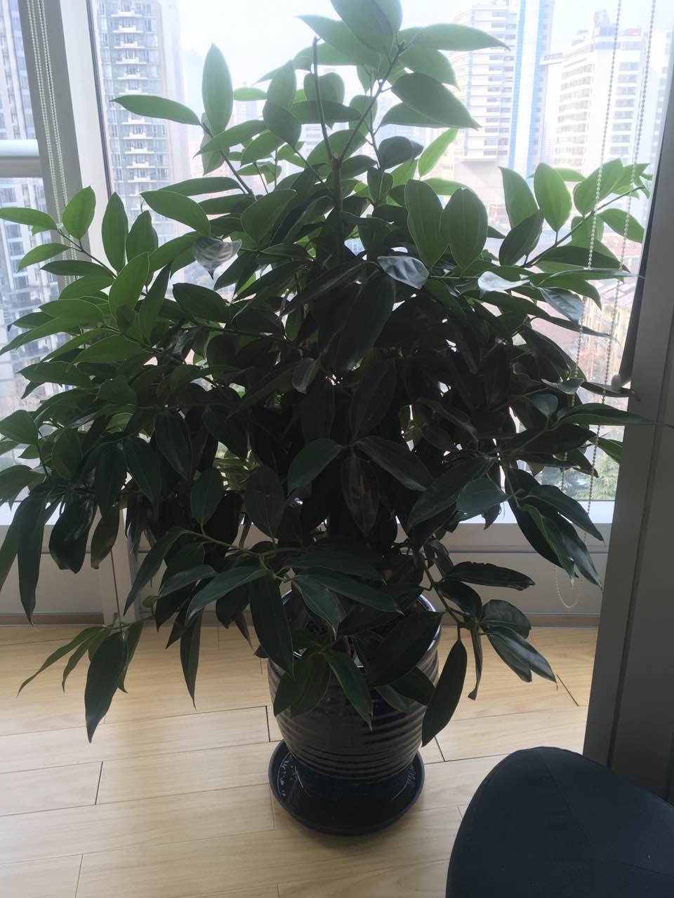 中型绿植租赁